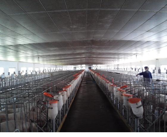 Phát triển Hợp tác xã (HTX) nông nghiệp kiểu mới