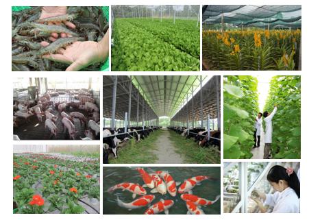 Sơ kết 3 năm thực hiện tái cơ cấu ngành nông nghiệp Thành phố Hồ Chí Minh