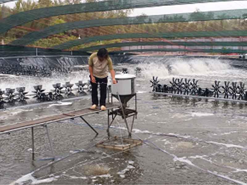 Nuôi tôm công nghệ cao tại huyện Cần giờ, thành phố Hồ Chí Minh