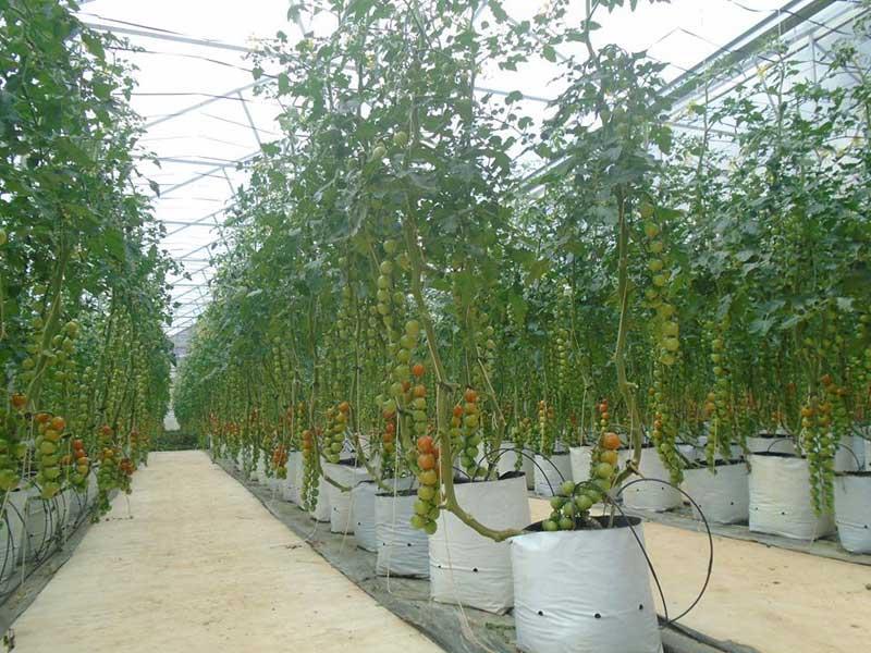 Giới thiệu VietGAP trồng trọt và thủ tục đăng ký chứng nhận VietGAP
