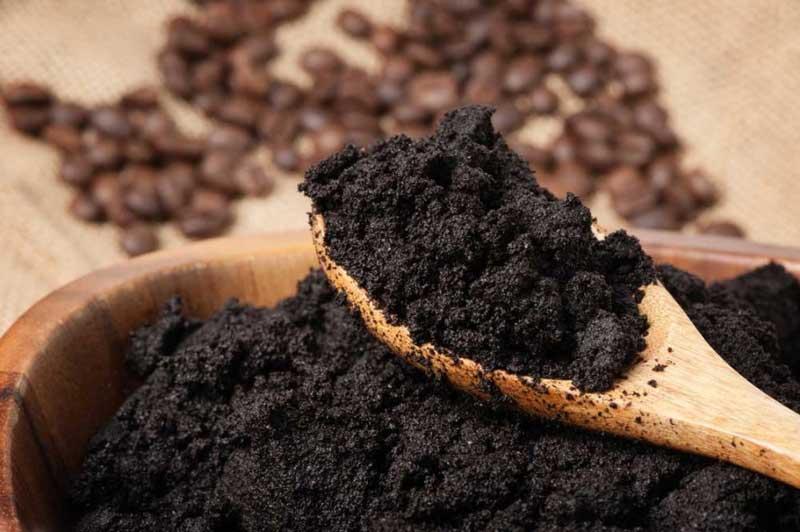 Đắng ngắt, đen xì nhưng là phân hữu cơ cho ra đời loại nấm hảo hạng