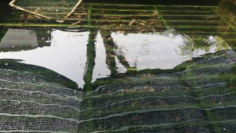 Tiềm năng sản xuất kinh doanh lươn thịt nuôi không bùn trong bể xi măng tại Thành phố Hồ Chí Minh