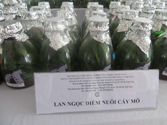 Sản xuất và cung ứng cây giống hoa lan nuôi cấy mô tại Tp.HCM