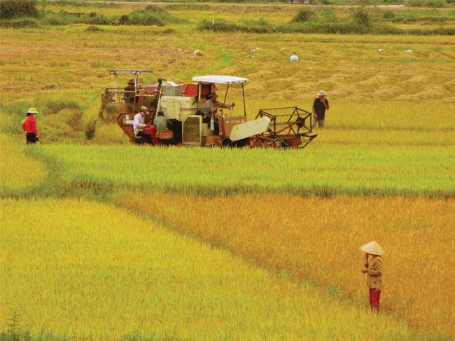Thêm nguồn vốn vay cho DN kinh doanh nông sản