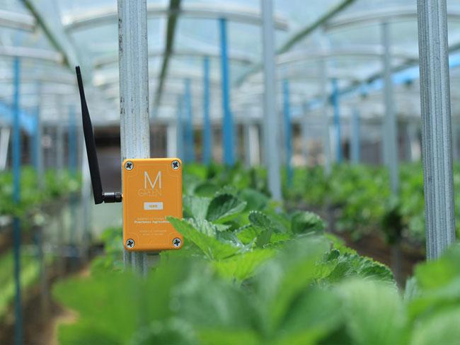 Nông nghiệp chính xác thông qua ứng dụng công nghệ thông tin