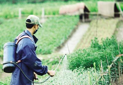 Thông tin, danh sách các mô hình sản xuất hoa cây kiểng, rau an toàn - Chi cục trồng trọt bảo vệ thực vật