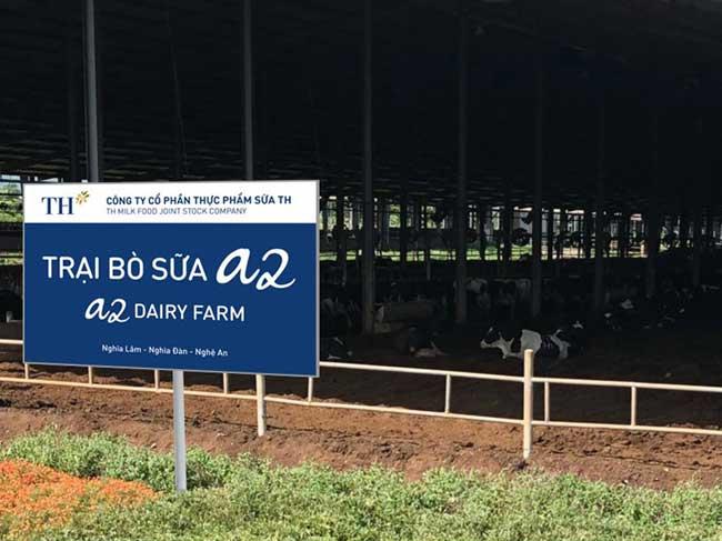 """""""Bò A2 - Sữa A2"""" - Hướng đi mới của ngành chăn nuôi bò sữa tại Việt Nam"""