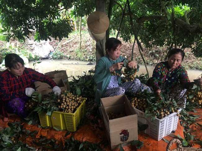 TP.HCM liên kết Đồng bằng sông Cửu Long xây chuỗi nông sản