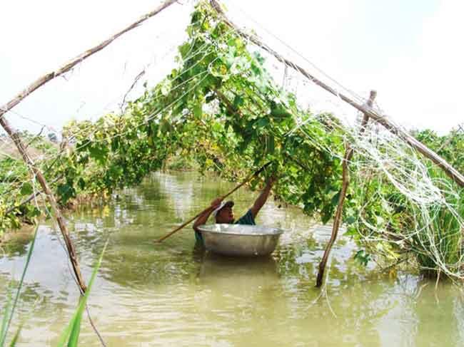 Hậu bão số 9 ruộng rau nước ngập tới cổ, TP.HCM lo