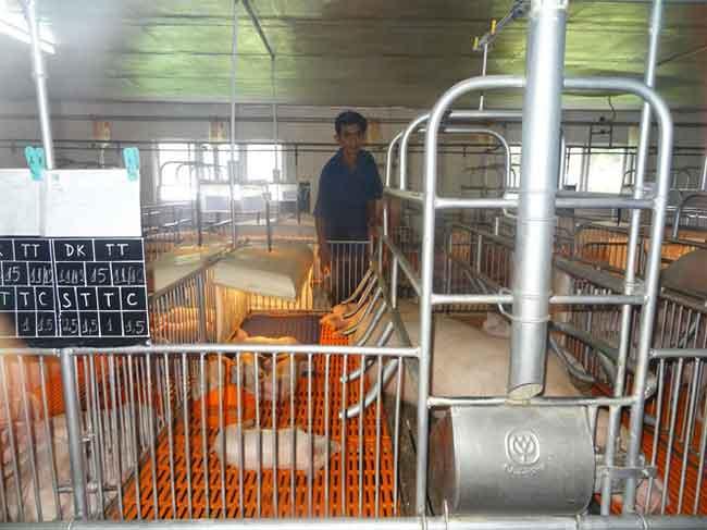 An toàn dịch bệnh để đảm bảo nguồn cung thịt lợn cho tết