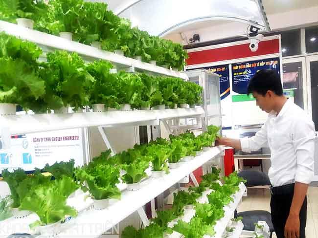 CESTI: gắn kết nghiên cứu ứng dụng lĩnh vực chế biến rau củ quả