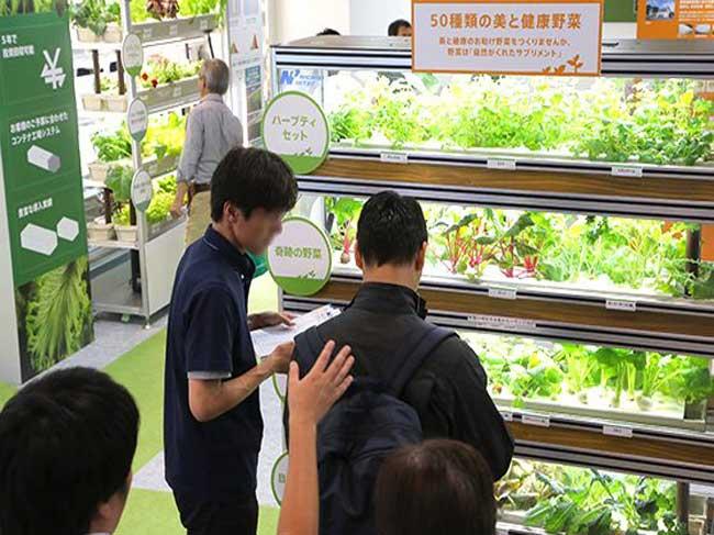 Chương trình học tập, khảo sát thực tế tại Nhật Bản