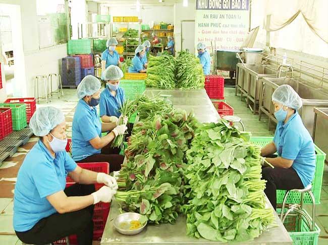 Mô hình hợp tác xã nông nghiệp tiên tiến, hiện đại của thành phố