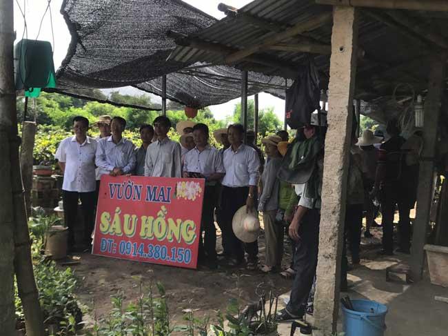 Kết quả khảo sát, học tập mô hình sản xuất mai đạt hiệu quả tại tỉnh Bình Định