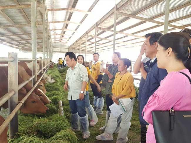 Kết quả tổ chức tham quan khảo sát học tập kinh nghiệm mô hình chăn nuôi bò thịt tại các tỉnh Miền Tây (An Giang, Trà Vinh, Bến Tre)