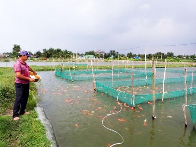 Người mở lối cho nghề cá cảnh ở Bình Lợi phát triển