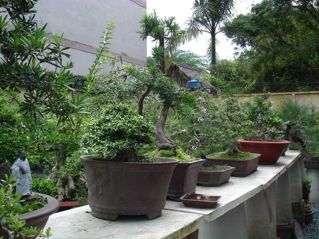 Hiệu quả từ mô hình trồng hoa cây kiểng tại TP.HCM – Bonsai